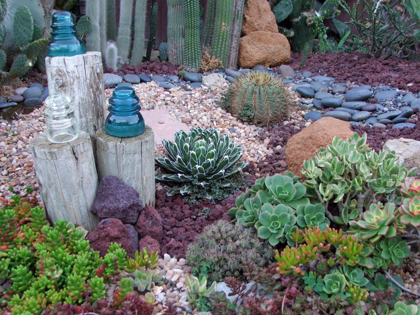 Drought Tolerant: succulents - alternative