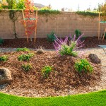 Best Xeriscape Shrubs