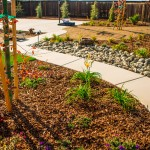 Drought Tolerant Landsdcape Design Consultation