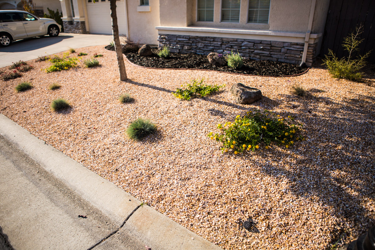 City-Wide Water Limits for Landscape Design