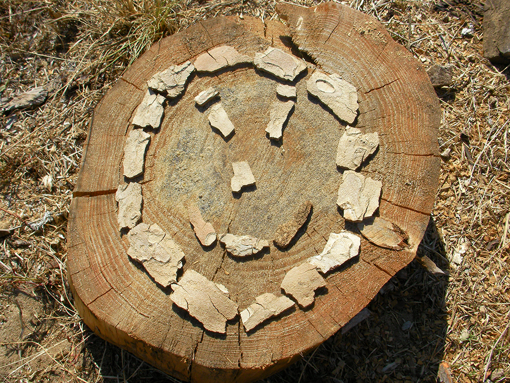 3 Things You Can Do With A Tree Stump In Your Landscape