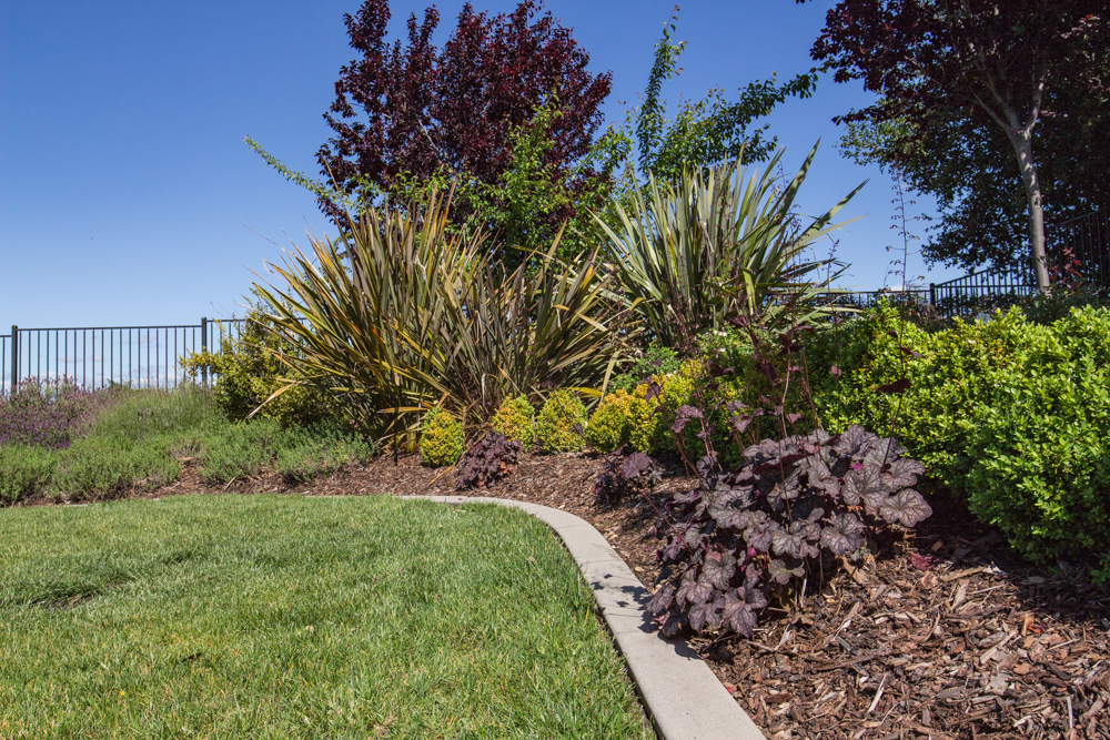 Five_STAR_Landscape_El_Dorado_Hills_Small_10