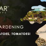 March Veggie Gardening Tips Sacramento