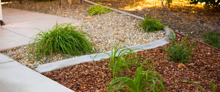 Landscape Upgrades to Cut Water Costs