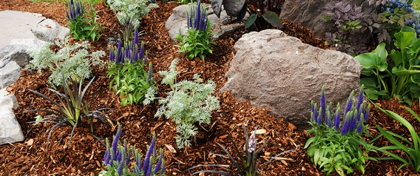 Best Xeriscaping Designs