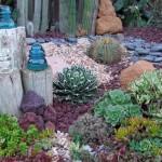 Drought Tolerant: succulents - alternative