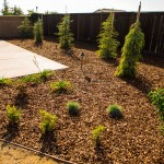 Best Xeriscape (Drought Tolerant) Trees for Landscaping