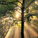 Tree Maintenance in Landscape Design