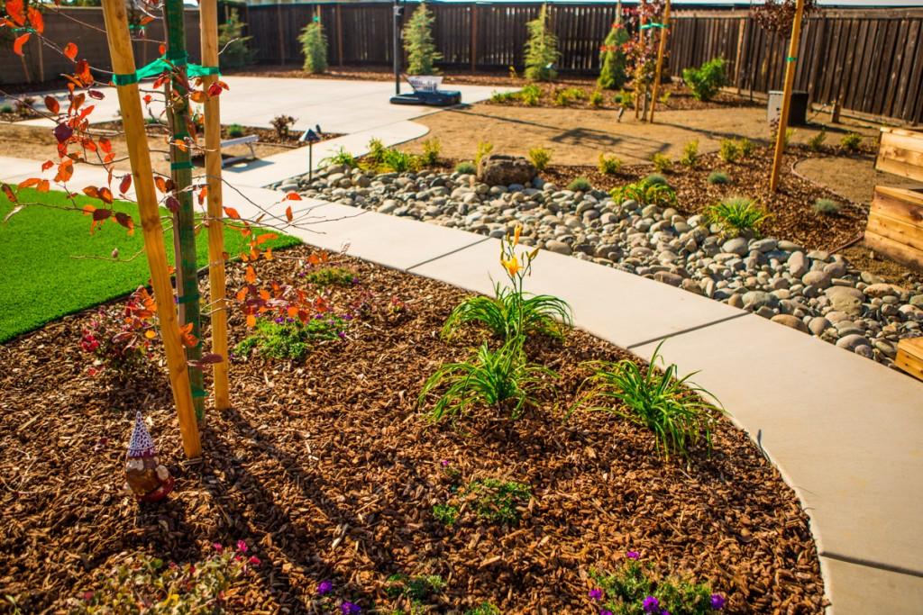 Drought Proof Landscape Renovation Sacramento