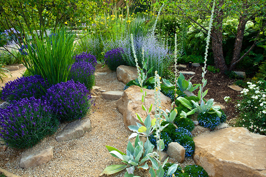 Planting Native Plants In Your Sacramento Landscape Design Zone 9b