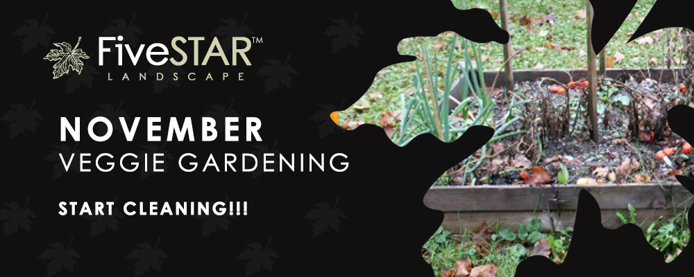 November Veggie Gardening Tips