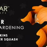 October Veggie Gardening Tips Sacramento