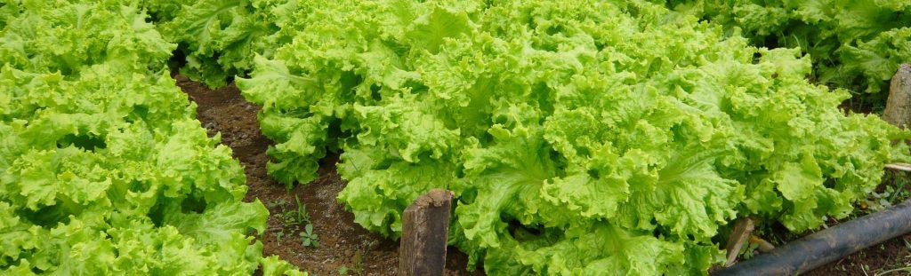 August Veggie Gardening