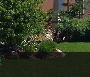 Green Landscaping in Sacramento