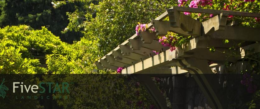 3 Backyard Ideas in Sacramento