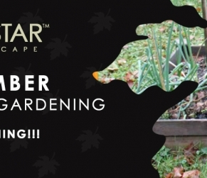 November Veggie Gardening Tips Sacramento
