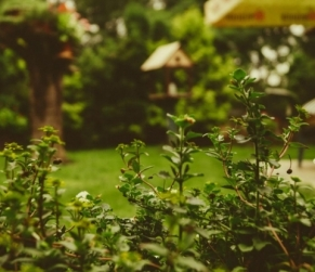 Eight Reasons to Look for Landscaping Contractors in Sacramento